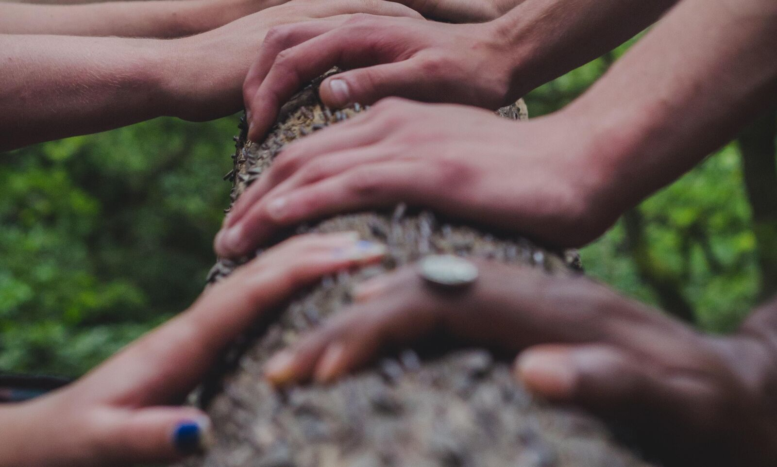 Hands placed on a tree working together